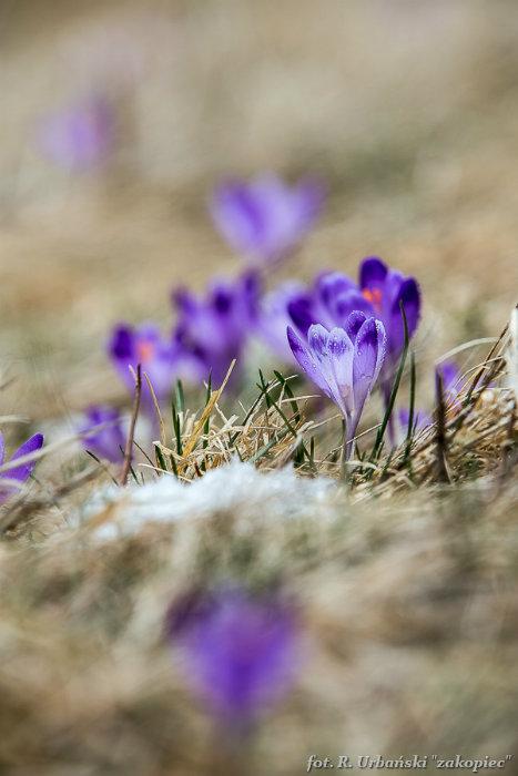 Jednodniowy kurs fotografii w Tatrach