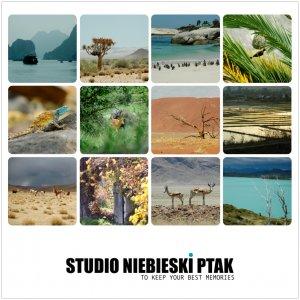 Studio Niebieski Ptak